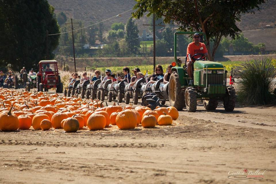 Underwood Family Farms, Pumpkin Patch | Fun With Kids in LA