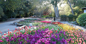 Descanso Gardens Will Reopen On May 16!