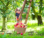 Family-Activity-5-Apple-Picking-Tips-wit