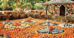 Pumpkin Patches near LA that are Planning to open in Fall 2020!