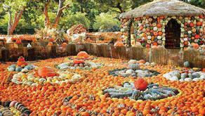 Best Pumpkin Patches Near Los Angeles 2021!