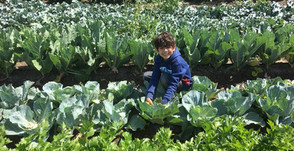All You need to Know about Pick Your Own Fruit & Veggies at Underwood Family Farms!