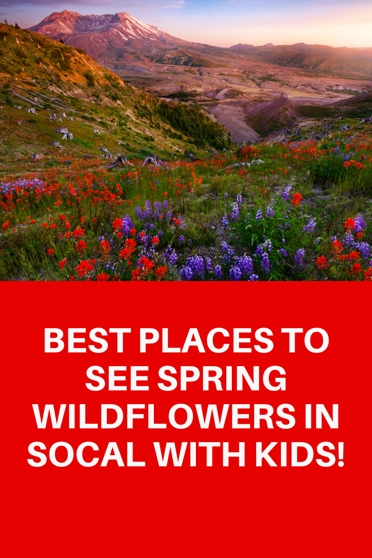 BEST PLACES TO SEE WILDFLOWERS NEAR LOS ANGELES