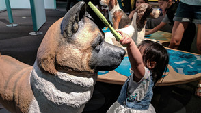 Over 40 museums Offer Free Admission Day On January 25, 2020!
