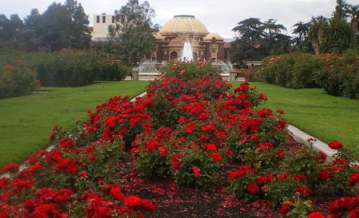 Exposition Rose Garden - Fun With Kids in LA