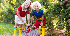 Best Places For Apple Picking Near Los Angeles That Are Open!