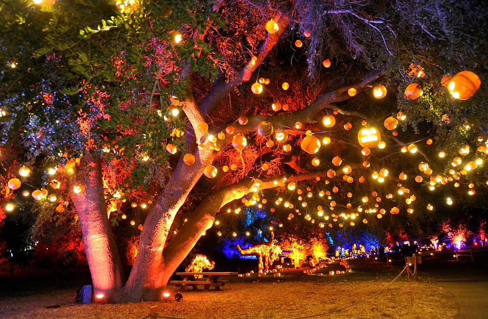Baja Festival at Aqurium of Pacific