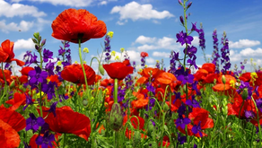 17 Best Places To See Spring Wildflowers in Southern California in 2021!