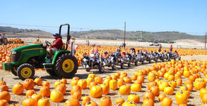 All You Need To Know About Fall Harvest 2020 at Underwood Family Farms!