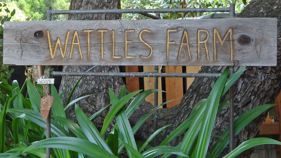 Wattles Farm