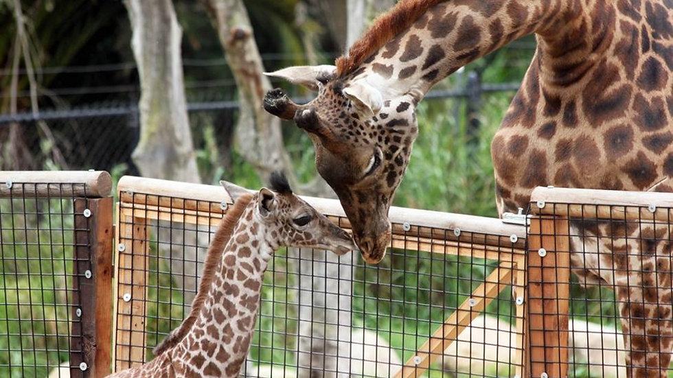 Santa Barbara Zoological Gardens