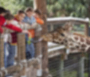 Southern California Zoos and Petting Zoos