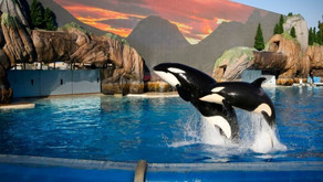 SeaWorld San Diego Reopens After A Long Wait!