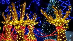 Hikari: A Festival Of Lights At Tanaka Farm!