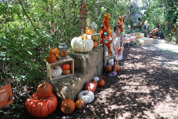 The Great Pumpkin Hunt | Fun With Kids in LA