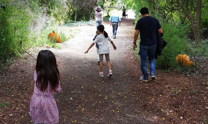 The Great Pumpkin Hunt | Fun With Kids in LA