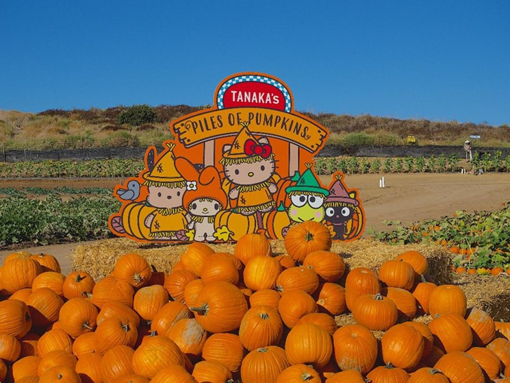 Sanrio Pumpkin Patch at Tanaka Farms | Fun With Kids in LA