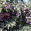 Thumbnail: Stone Pantry Orchard