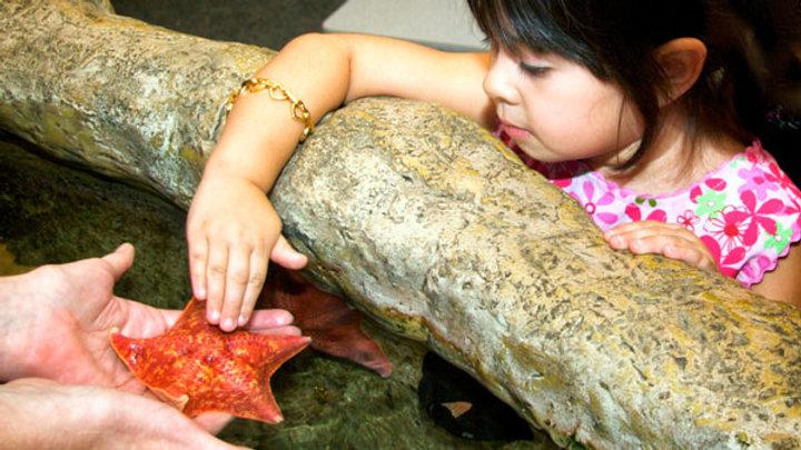 Aquarium of the Pacific Sea Squirt Camp
