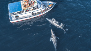 The Best Whale Watching Experience With Social Distancing!