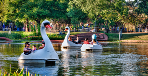 Ride a Swan Boat And Eat Inside a Boathouse With Your Kids At Echo Park Lake!