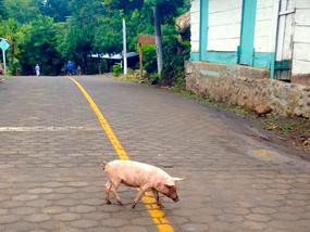 Nica Life: Granada to Isla Ometepe