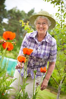 Buy Poppy Seeds at One Stop Poppy Shoppe