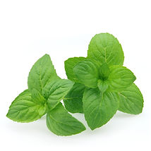 Organi Spearmint Essential Oil