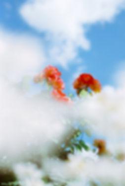 Shonosuke Honma From above Clouds.jpg