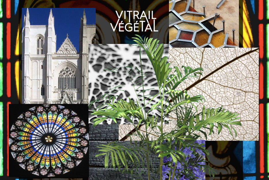 cedre_blanc_vitrail_vegetal2