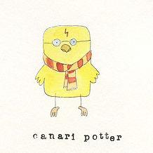Canari Potter