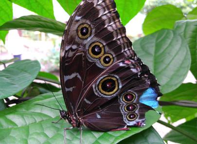 Mindo, paradis des papillons et des oiseaux