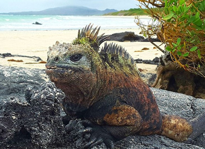 Archipel des Galapagos 1 - Isla Isabela