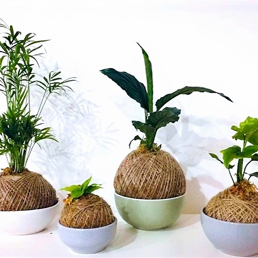 KOKEDAMA with The Love of Succulents by Mel