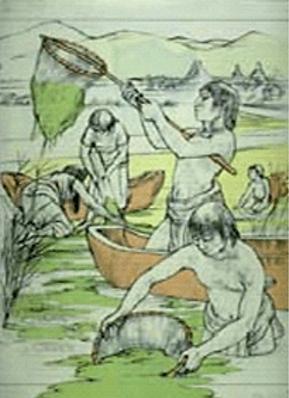 Dessin récolte de Spiruline des Aztèques