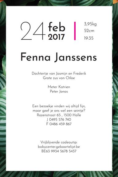 fenna2.png