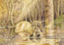 Duck card.jpg