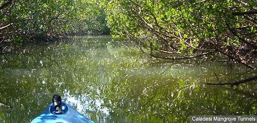main-caladesi-mangrove-tunnels.jpg