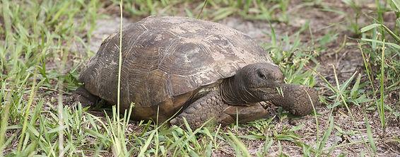 Endangered_Species.jpg