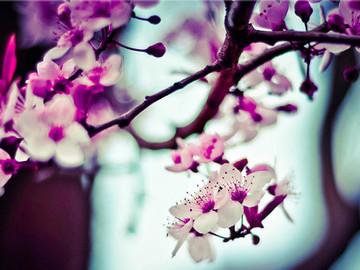 あなたという花が世界に一輪ひらく
