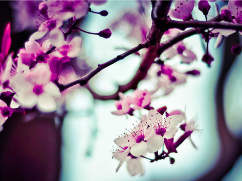 The Rites of Spring