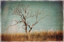 lone tree-briars
