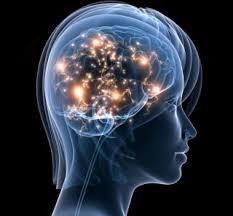 La neuroplasticité