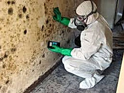 Inspection and Mold Damage Assessment