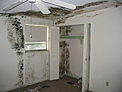 Removing Mold and Mold-Infested Materials