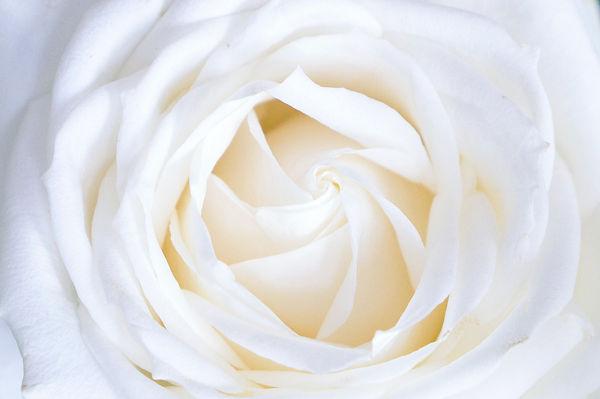 rose portal 13th chakra