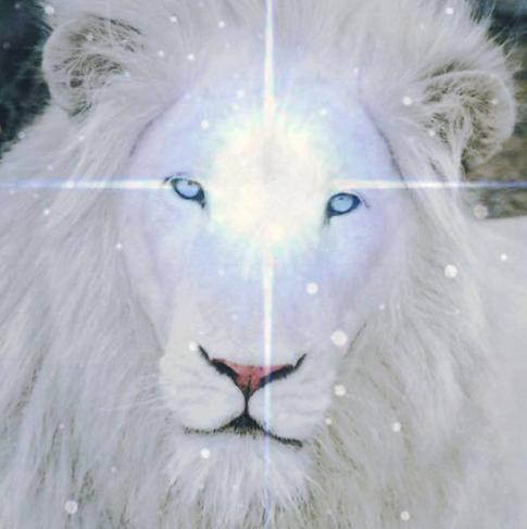 LIONS GATE MEDITATION
