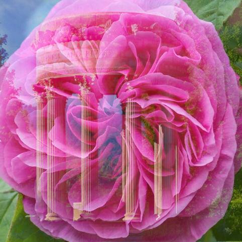 rose venus temple