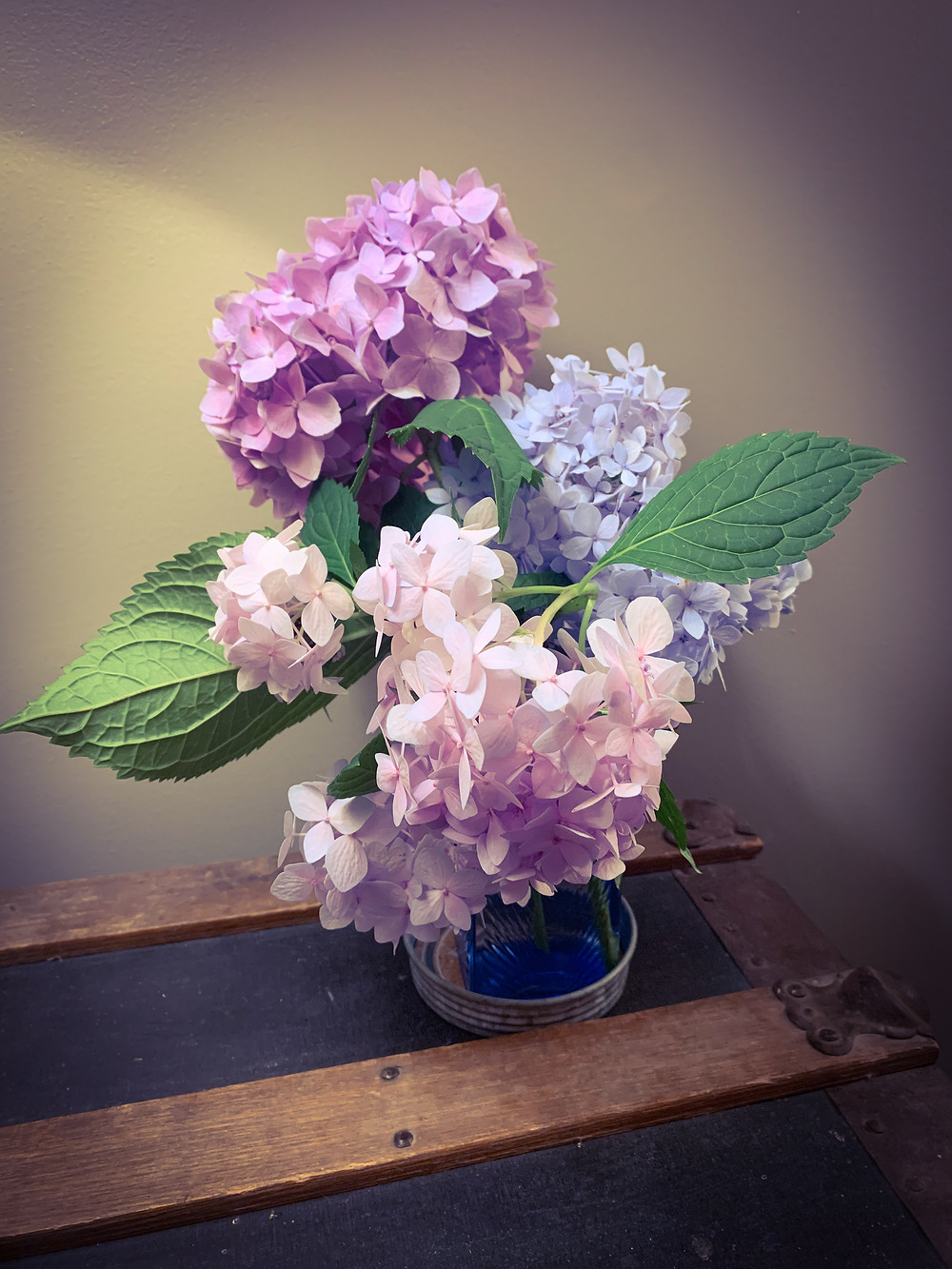 Hydrangeas are one of my favorite flowers so I have quite a few of them around our yard.