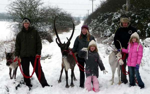 Reindeer2Hire a family business